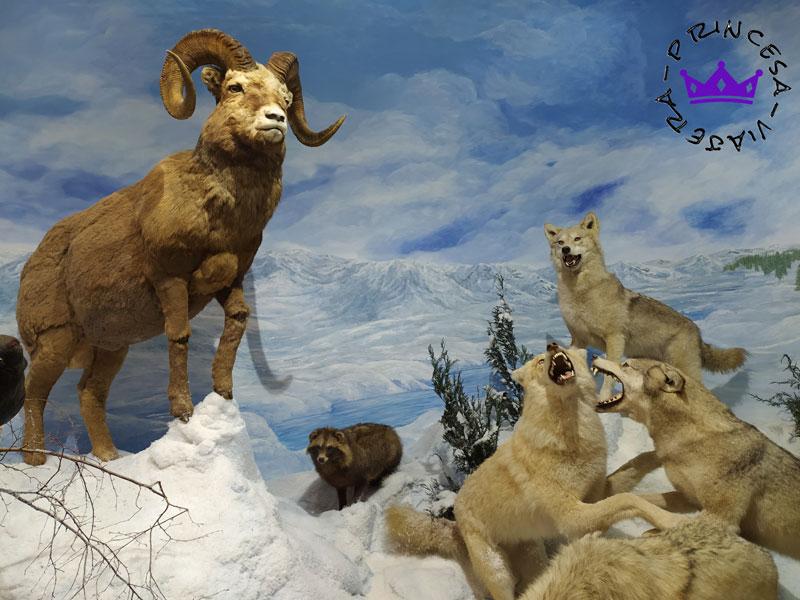 museo fauna salvaje